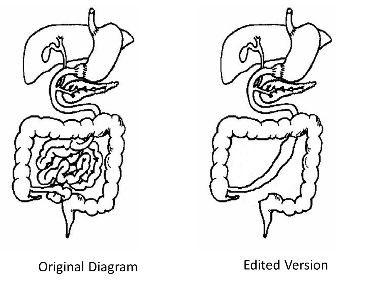 Digestive system coloring pages
